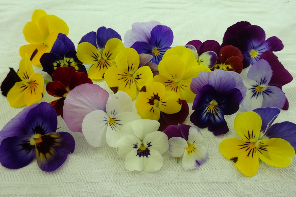 Hornveilchen-essbare-Blüten
