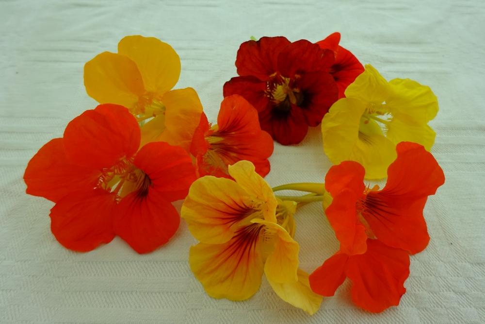 Kapuzinerkresse-essbare-Blüten