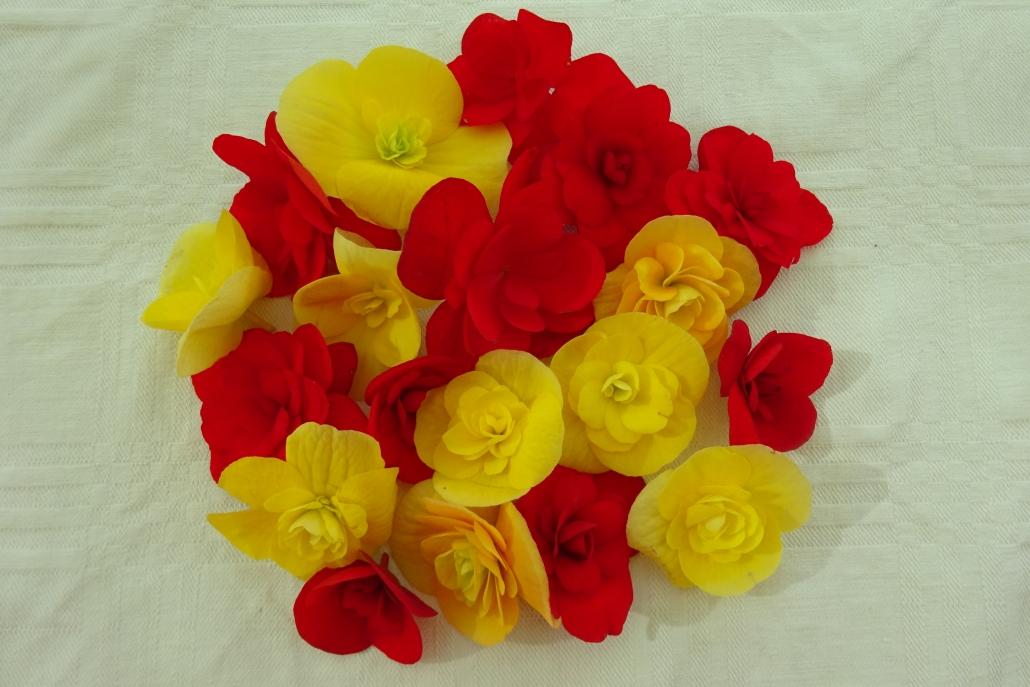Knollenbegonien-essbare-Blüten