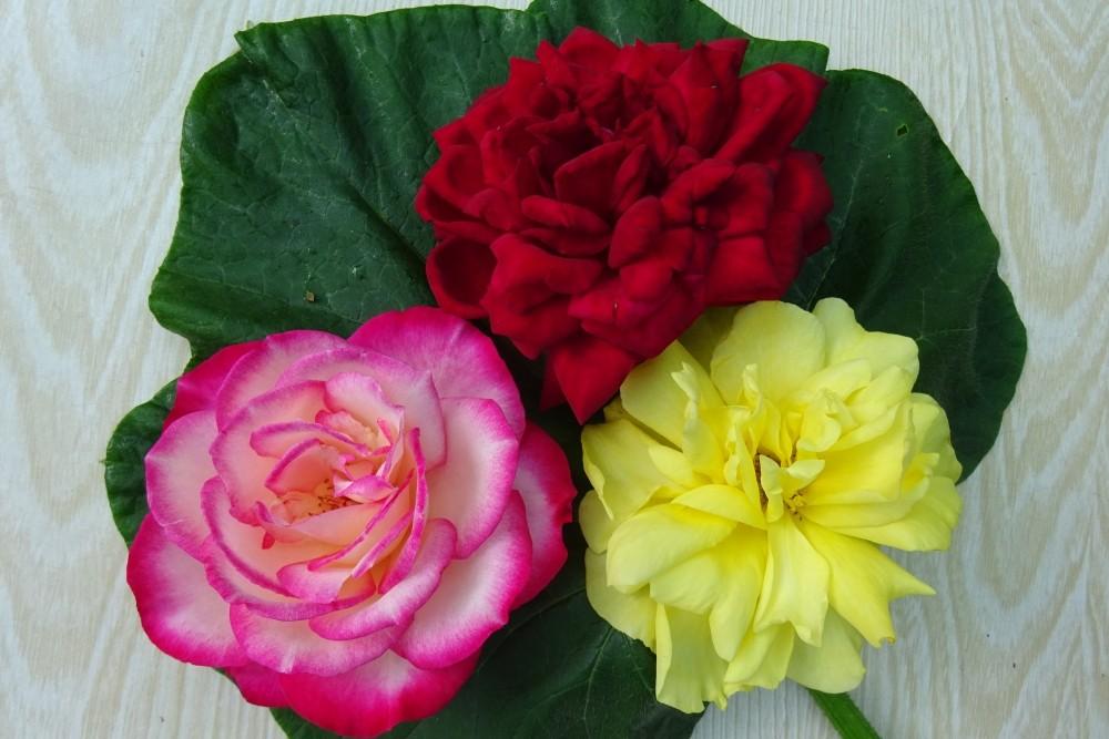 Rosen - essbare Blüten