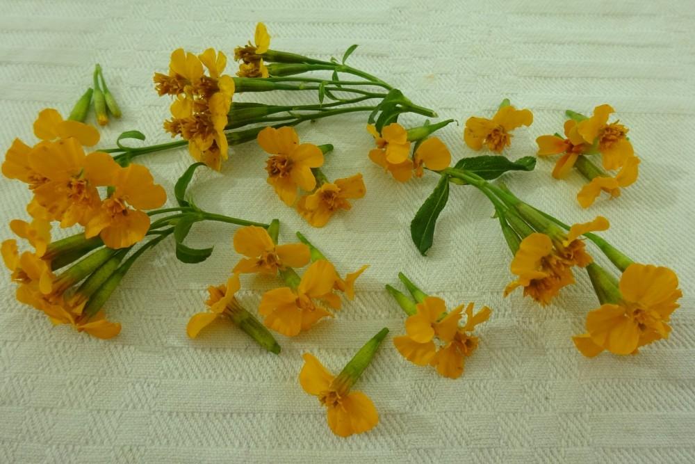 Würztagetes-essbare-Blüten