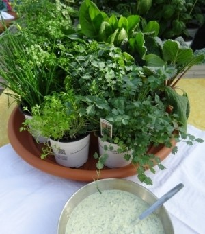 7 Kräuter der grünen Soße