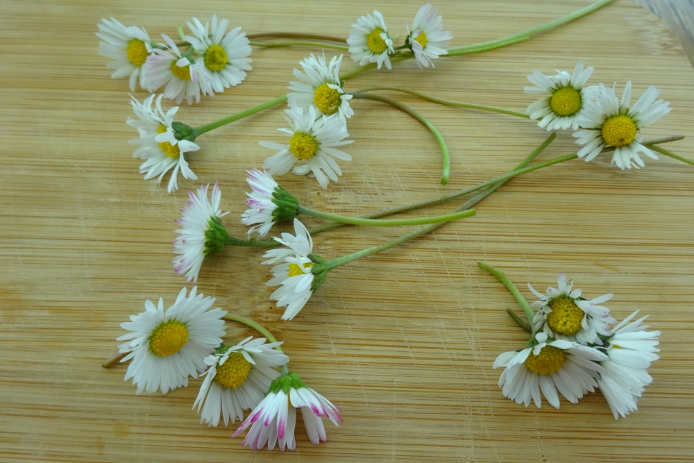 Gänseblümchen - essbare Blüten 2